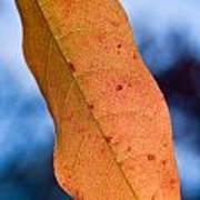 Golden Lanceolate Leaf Art Print