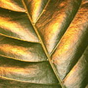 Golden Leaf 2 Art Print