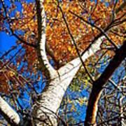 Golden Leaves II Art Print