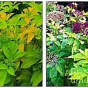 Golden Leaves To Purple Seeds Art Print
