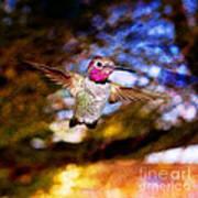 Golden Light Hummingbird Flight Art Print