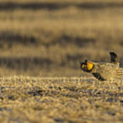 Golden Light On The Prairie Art Print by Thomas Young