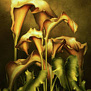 Golden Lilies By Night Art Print