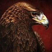 Golden Look Golden Eagle Art Print