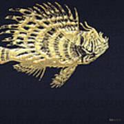 Golden Parrot Fish On Charcoal Black Art Print