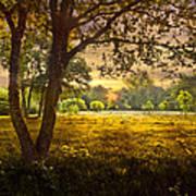 Golden Pastures Art Print