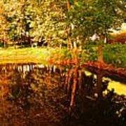 Golden Pond 4 Art Print