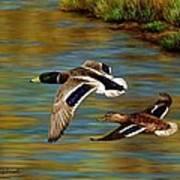 Golden Pond Art Print by Crista Forest