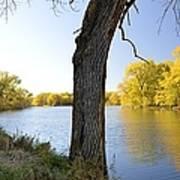 Golden Pond Panorama Art Print