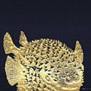Golden Puffer Fish On Charcoal Black Art Print
