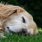 Golden Retriever Dog Sweet Dreams Print by Jennie Marie Schell