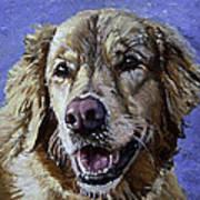 Golden Retriever - Molly Art Print