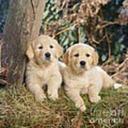 Golden Retriever Puppies In The Woods Art Print