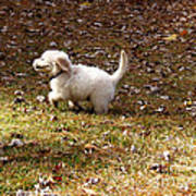 Golden Retriever Puppy Print by Andrea Anderegg