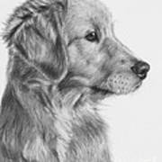 Golden Retriever Puppy In Charcoal One Art Print