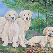 Golden Retriever Puppy Trio  Art Print