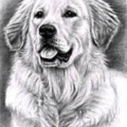 Golden Retriever Spence Art Print