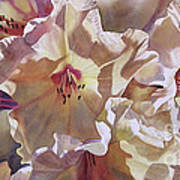 Golden Rhododendronfull Art Print