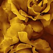 Golden Yellow Roses Art Print