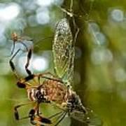 Golden Silk Spider Art Print