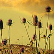 Teasels Reach For The Golden Sky Art Print