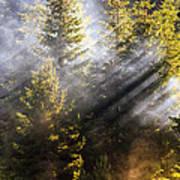 Golden Sunbeams Art Print