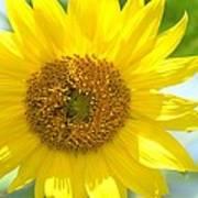 Golden Sunflower - 2013 Art Print