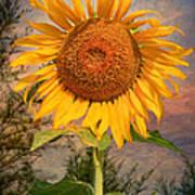 Golden Sunflower Art Print by Adrian Evans