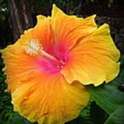 Golden Sunset Hybiscus Art Print