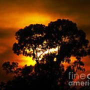 Golden Sunset... Art Print