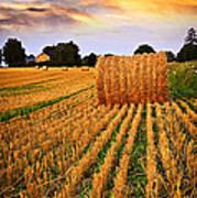 Golden Sunset Over Farm Field In Ontario Art Print
