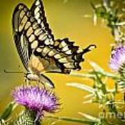 Golden Swallowtail Art Print