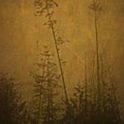 Golden Trees In Winter Art Print