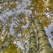 Golden Trees Summer Art Print