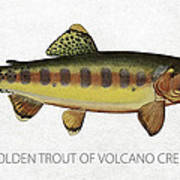 Golden Trout Of Volcano Creek Art Print by Aged Pixel