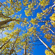 Golden View Looking Up Art Print