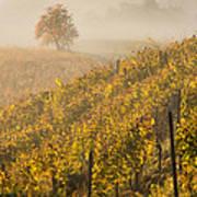 Golden Vineyard And Tree Art Print