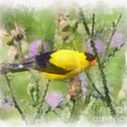 Goldfinch #3 By Kerri Farley Art Print