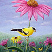 Goldfinch And Coneflowers Art Print