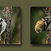 Goldfinch Collage Art Print