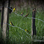 Goldfinch Gathering Art Print