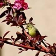 Goldfinch In Tree 031015aa Art Print