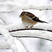 Goldfinch On Snowy Branches Art Print