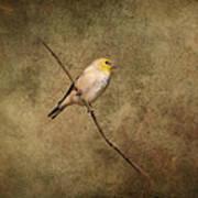 Goldfinch Portrait Art Print