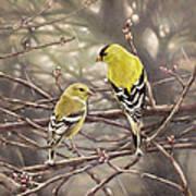 Goldfinches In The Rain Art Print