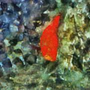 Goldfish Photo Art 05 Art Print