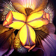 Goldie's Iris Art Print