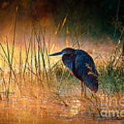 Goliath Heron With Sunrise Over Misty River Art Print