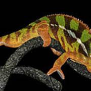 Good Night Chameleon Art Print