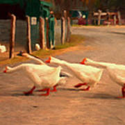 Goose Crossing Art Print by Michael Pickett